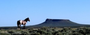 sweetwater wild horses