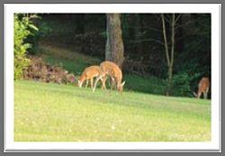 wkybb deer